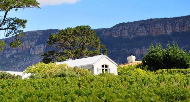 康斯坦提亚:南非最迷人的酒庄
