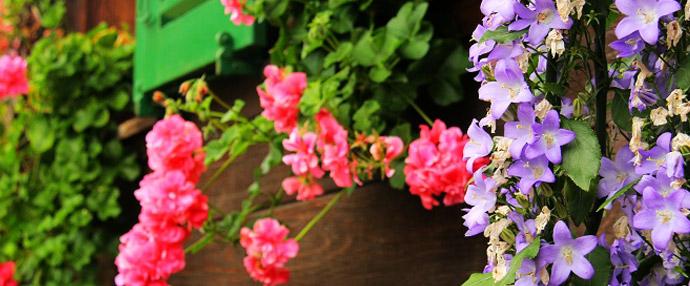 瑞士小山村:花开在眼前