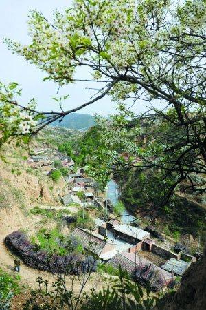 村里村外、山上山下,处处能看到海棠花。种海棠和种葡萄的收入,是当地人的主要生活来源。