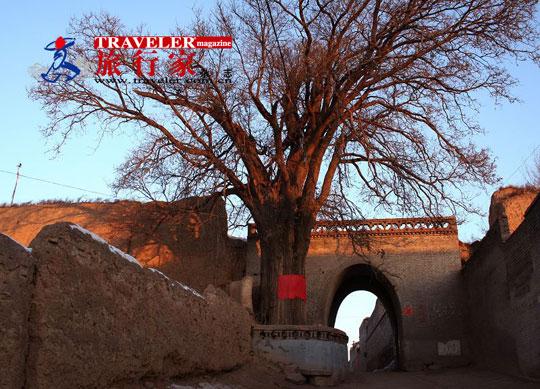 梁村南乾堡的堡门和门前的古树