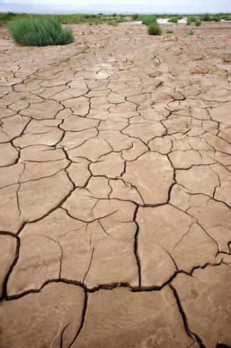 这些龟裂的泥土还含有一点水分,表面却是奇怪的动物纹。