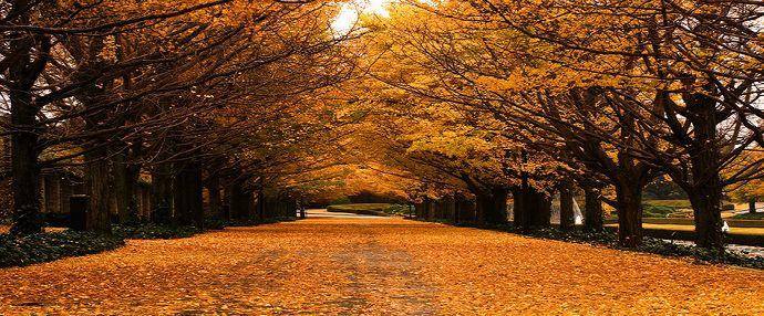 广州山楂树之恋 观月猎北叹静秋