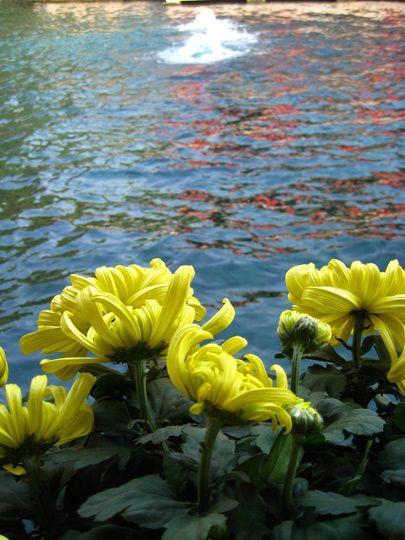 趵突泉公园中花与泉相映成趣
