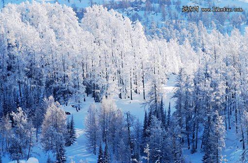漫山雾凇奇景 摄影:于仲涛