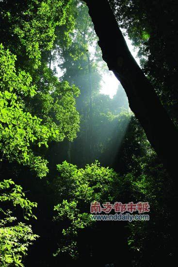 阳光穿透雨林