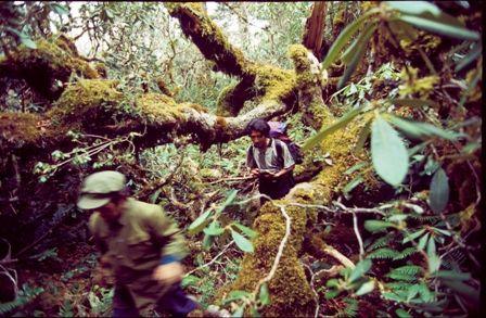 原始森林的穿越