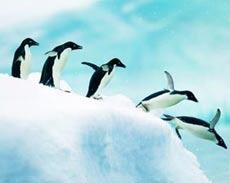 从阿根廷进入南极