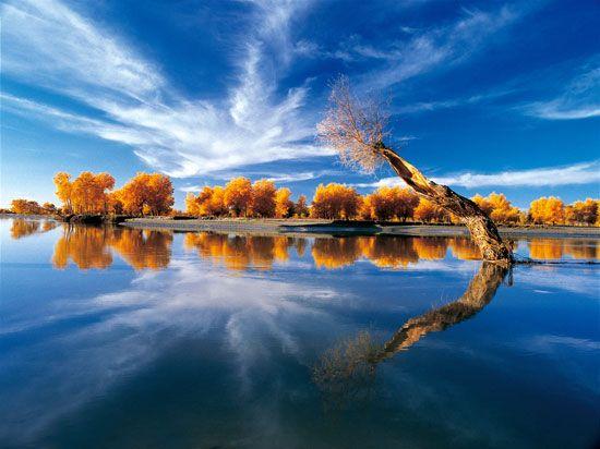 秋天最美的胡杨