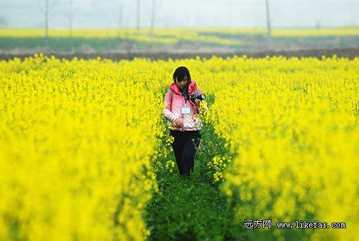 花海里的摄影者 摄影:魏尧