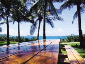 热带森林天堂