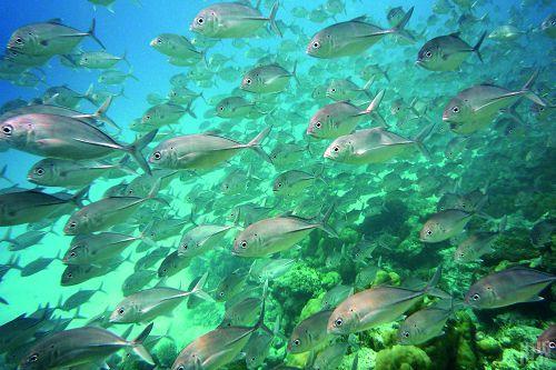 五彩的鱼从眼前穿梭往来,缤纷的珊瑚礁蔚为奇观