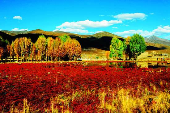 新浪旅游配图:亚丁秋天十分惊艳的红草地。 来源:《中国国家旅游》