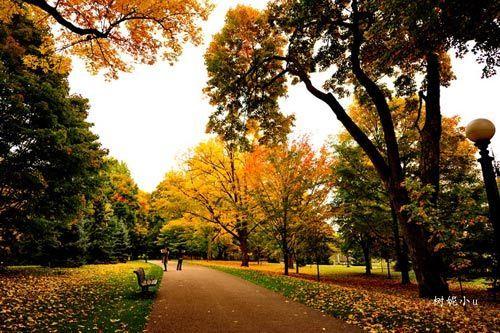 加拿大秋日