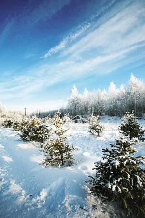 冬游呼伦贝尔