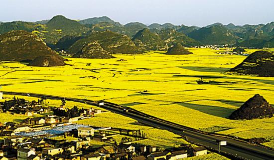 阳春三月,罗平的油菜花黄了一片(向远坤 东方IC)
