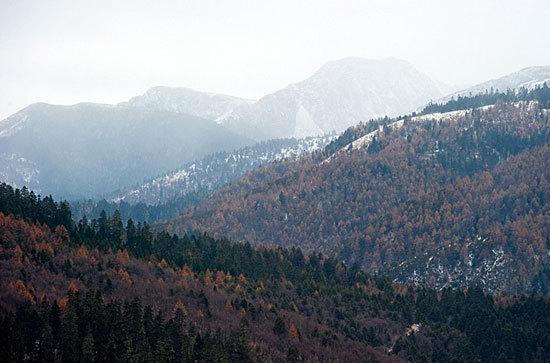 薄薄的一层雪花覆盖着森林