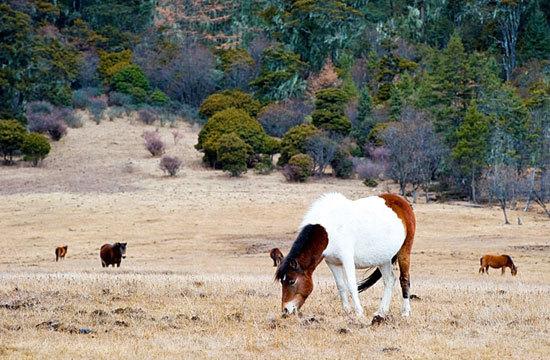 马儿们在草地自在地找着吃食