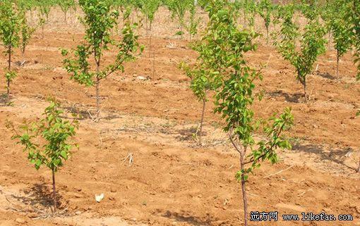 给未来一片绿:2012北京春季植树全攻略(2)外星来客游戏攻略图片