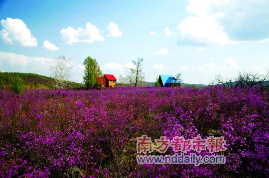 草原上的美景
