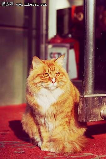 晒太阳的猫咪(作者:猫眼圣骑)