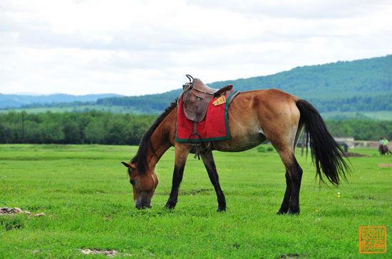 新浪旅游配图:悠闲的马儿 摄影:北角山妖