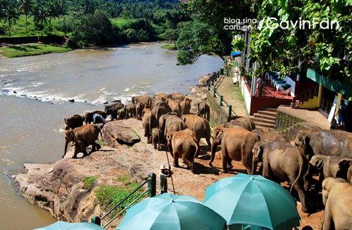 大象结队去洗澡