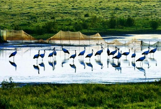 八岔自然保护区