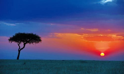 肯尼亚高原多彩纳库鲁 情陷火烈鸟天堂