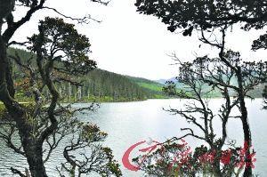 属都湖畔苍劲的枝条映衬着清澈的湖面