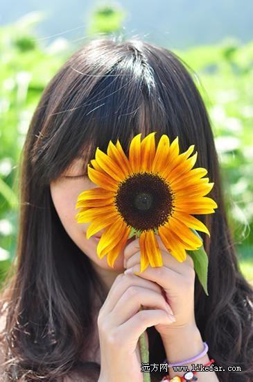 葵花与阳光 摄影:张楠