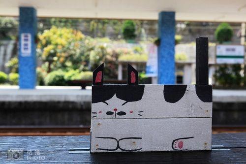 站台上的猫咪