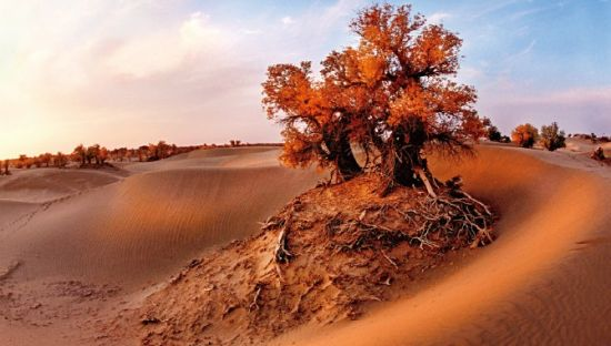 沙漠风景区拍照姿势