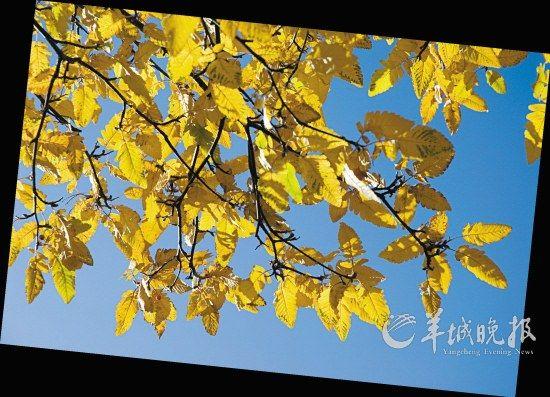 美丽的树叶