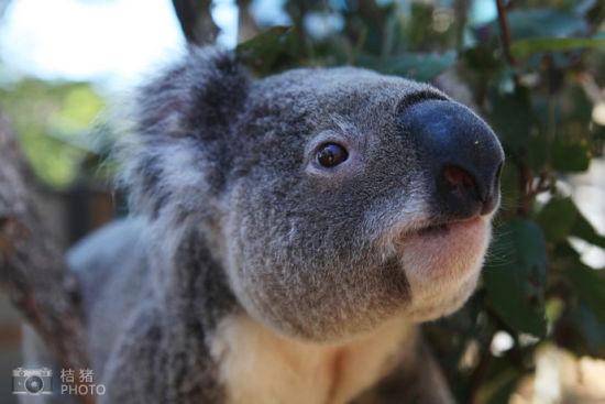 悉尼塔隆加动物园赴一场卖萌派对