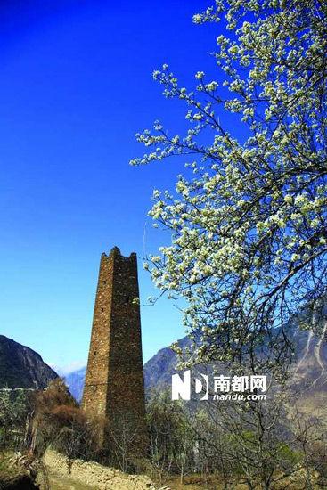 丹巴的碉楼与梨花互相辉映。