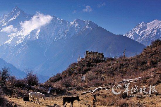 当年工布王的巍峨城堡只剩得衰草枯杨,而藏民们的马匹却依旧在这里自顾自地游荡