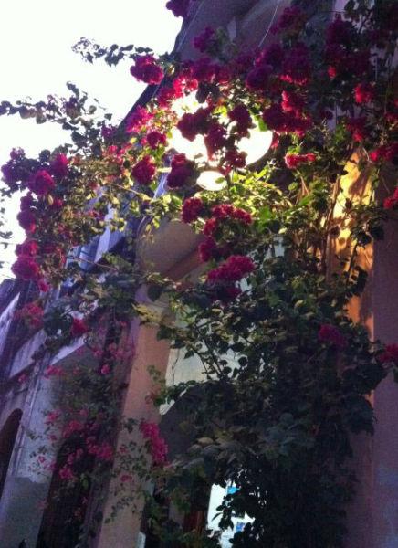 民居旁漂亮的花儿 图片来源:大陈与小陈的五味生活 新浪博客