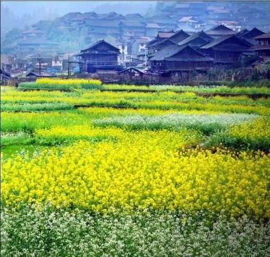 柳州苗寨风光 图片来源:新浪旅游