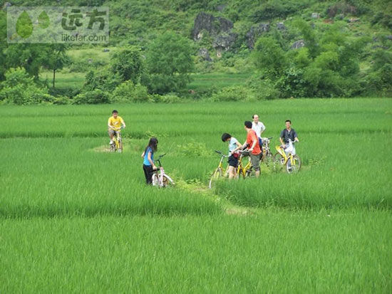 青葱稻田中骑行的游客 图片来源:远方网