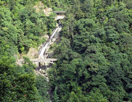 茂密的森林 图片来源:远方网