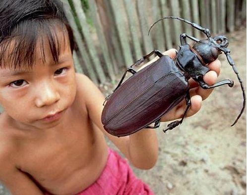 盘点世界上现存最大的十类昆虫