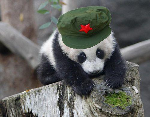 用游走动物园的心态观赏大熊猫似乎显得不敬,而当脚步放慢,才能真正