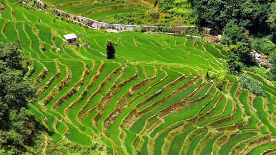 中国,田野之美