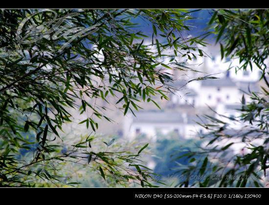 木坑竹海――透过竹海隐约看到的木坑村