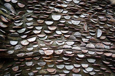 """英国""""金钱""""树"""