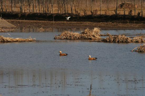 野鸭游剑湖