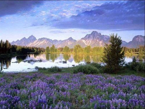 """被誉为""""塞外江南""""的伊犁三面环山(天山),这里日照充分,气候湿润,昼夜温差大,造就了沃野千里,草肥水甘,物产富饶,资源独特。这就是中国的薰衣草之乡。"""