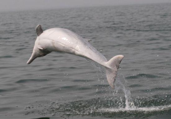 三娘湾海豚 图源:新浪网
