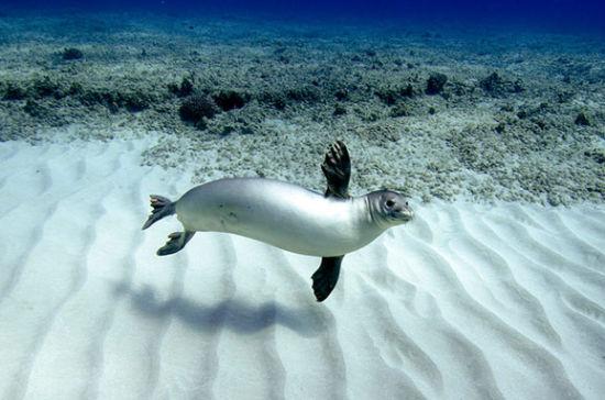 探索神秘丰富的海底世界