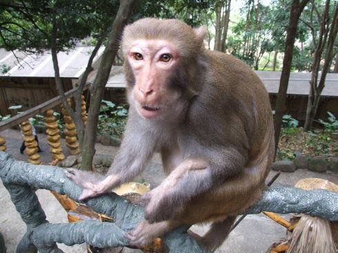 可爱的猴子
